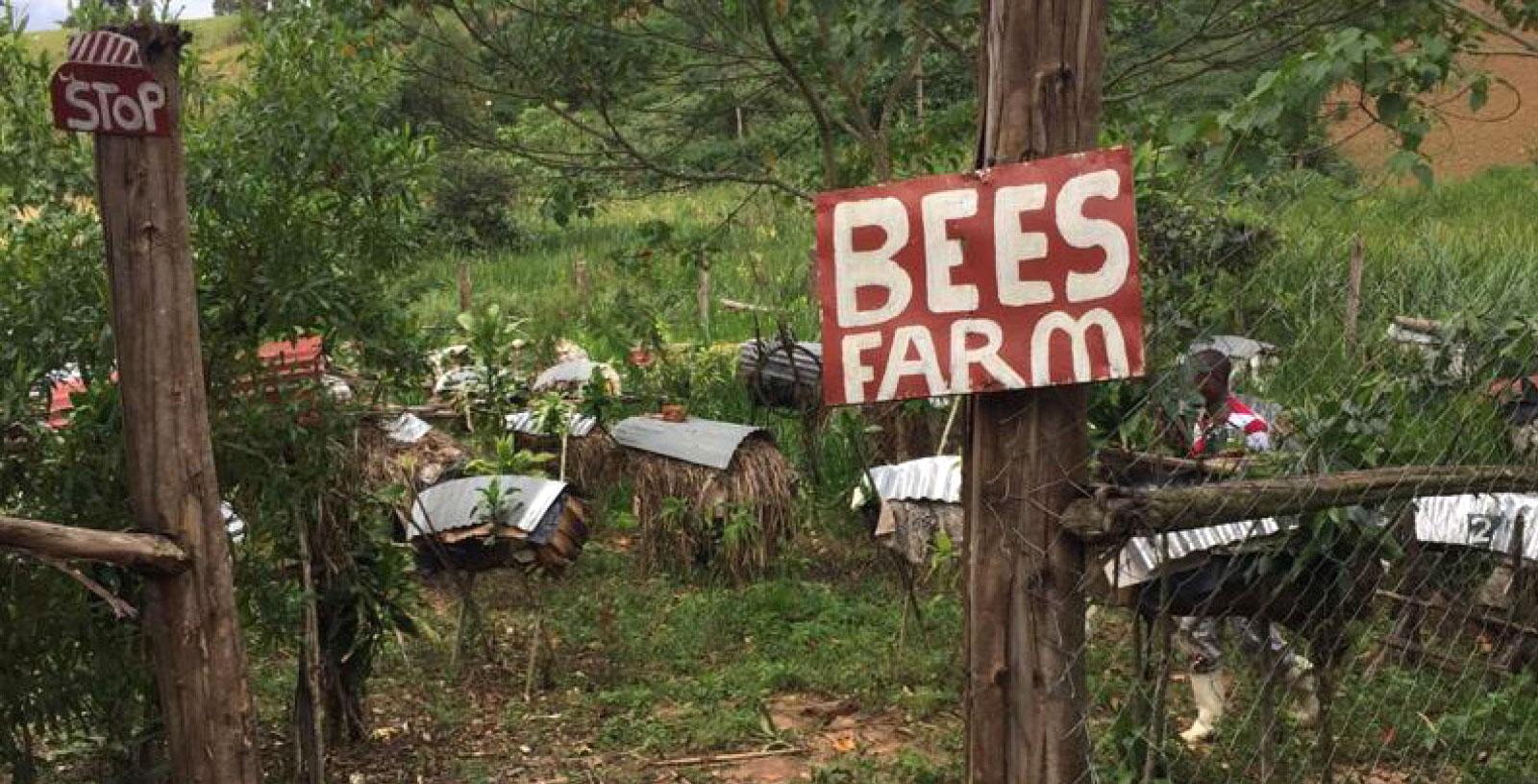 Beekeeping_big