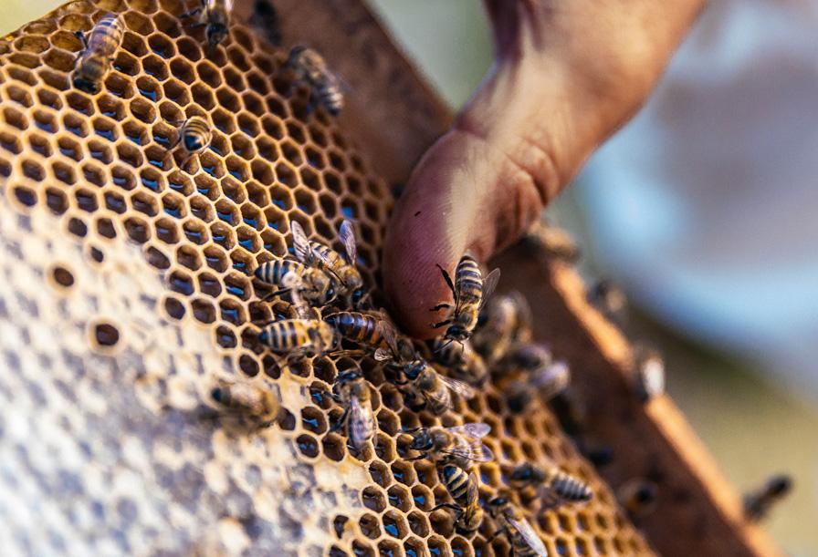 Beekeeping_start
