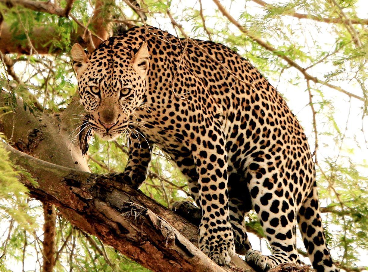 Wildlife_2